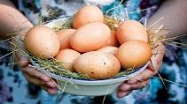 Куриные яйца для здоровья